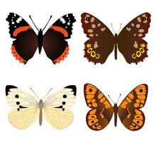 Collection Of Four Common Butterflies