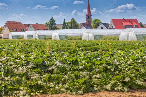 Dorf Landwirtschaft Gemuseanbau Foliengewachshaus Acheter Cette
