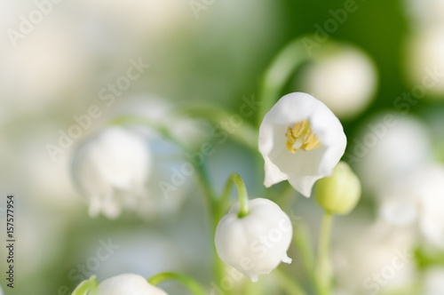 Photo Stands Lily of the valley flower Lily of the valley closeup