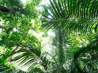 Fototapeta 石垣島のジャングル