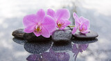 Fototapeta Flowers - Three pink orchids and black stones close up.