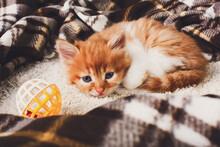 Sad Red Orange Kitten At Plaid...