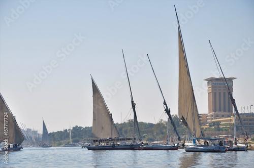 Foto auf Acrylglas Schwan Feluccas in Nile River, Egypt