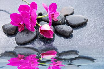 Obraz na płótnie Canvas Pnk orchids and black stones close up.
