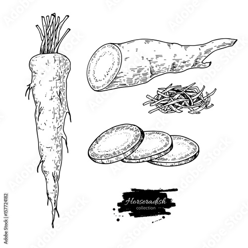 Horseradish hand drawn vector illustration Fototapet