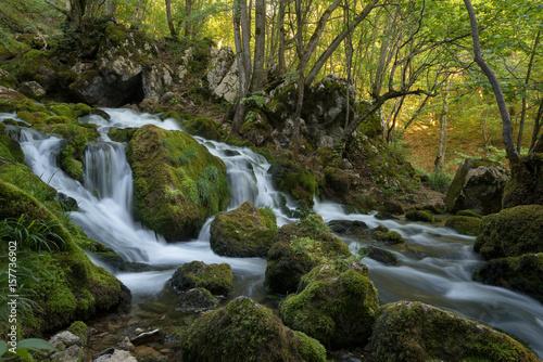 Foto auf Gartenposter Forest river Spring in a forest