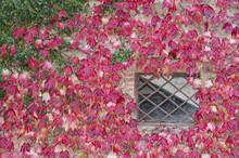 Montichiello - Italy, October ...