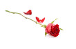 canvas print picture - Red rose