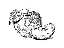 Apple Fruit Engraving Style Vector Illustration