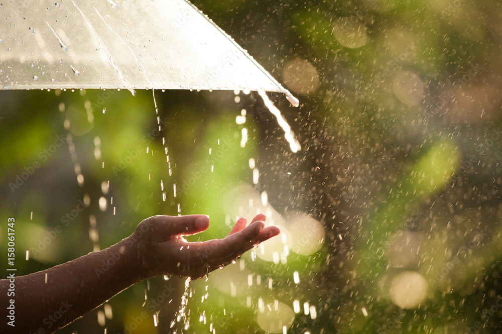 Fototapeta Woman hand with umbrella in the rain in green nature background