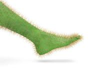 Foot Cactus On White Backgroun...