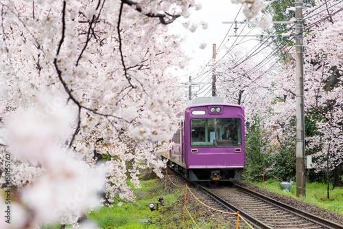 pociag-wsrod-kwitnacej-wisni-japonia