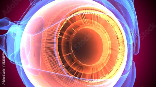 Fotografía  3d illustration human body eye anatomy