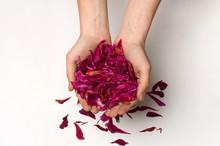 Peony Petals In The Hands