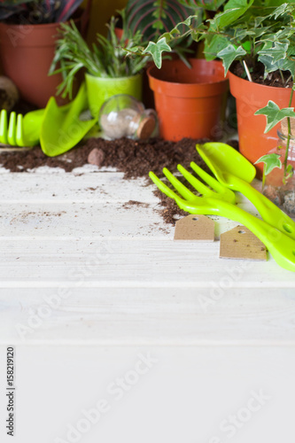 Aluminium Prints Garden Potted plants in pots. Transplanting flowers. White background.