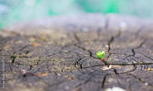 Fotografie, Obraz  pflanze auf Baumstumpf