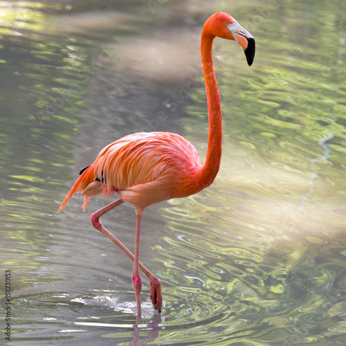 Fotobehang Flamingo Pink flamingo on a pond in nature