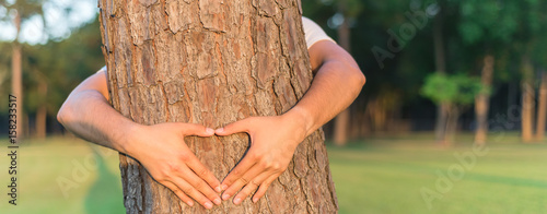 Male hands making a heart shape around the trunk of pine tree Wallpaper Mural