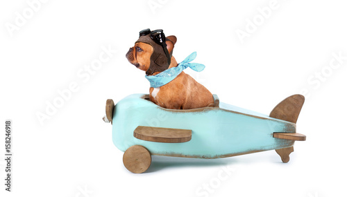 Hund mit Fliegermütze im Holzflieger Canvas Print