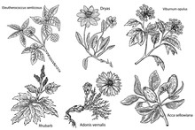 Set Of Medicinal Plants Isolat...