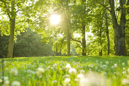 Valokuva 公園 太陽光