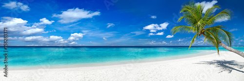 Photo  coco palm panorama super wide format on tropical paradise dream beach
