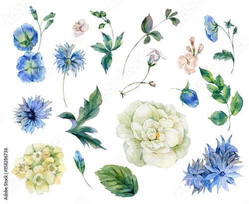 Leinwandbilder - Set of watercolor roses, leaves and blue wild flowers