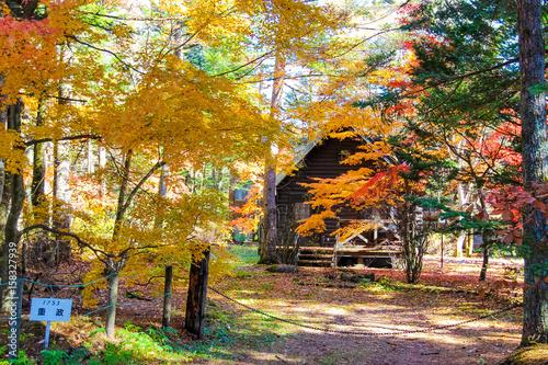 Keuken foto achterwand Begraafplaats Autumn season in Karuizawa, Japan