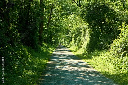 Foto op Plexiglas Groene Bavarian countryside in summer, green foliage tunnel over path
