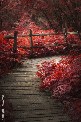 Poster Marron chocolat Beautiful surreal red landscape image of wooden boardwalk throughforest in Spring