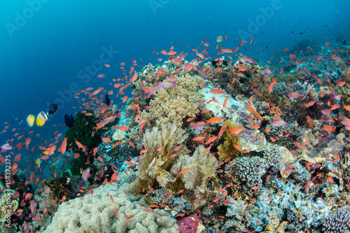 Poster Under water Vibrant Coral Reef in Indonesia