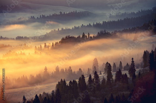 Poster Morning with fog Misty mountain forest landscape in the morning, Poland