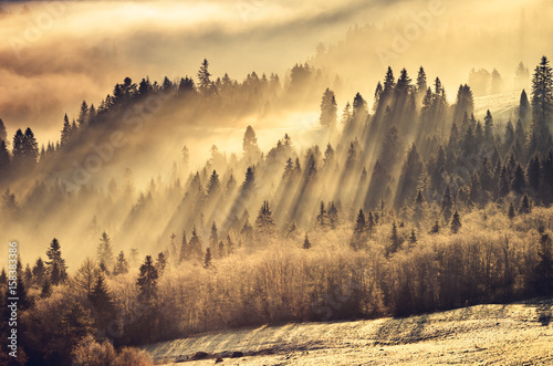 Obrazy Polska misty-mountain-forest-landscape-in-the-morning-poland