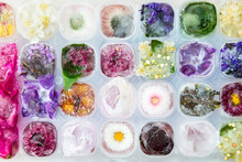 Tray With Frozen Flowers In Ic...