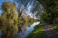 A Path By The River Lee With T...