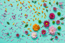 Colored Asters On Canvas. Abstract Background
