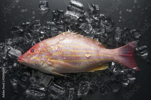 Fotobehang Fisch gebettet auf Eiswürfeln