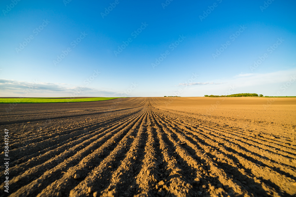 Fototapeta Agricultural landscape, arable crop field. Arable land is the land under temporary agricultural crops capable of being ploughed and used to grow crops.