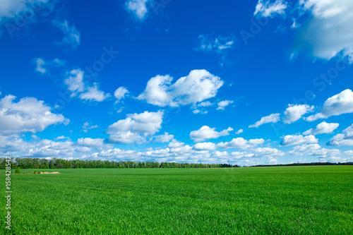Foto op Plexiglas Groene field of grass and perfect sky
