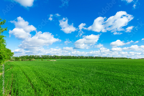 Foto auf Gartenposter Landschappen field of grass and perfect sky