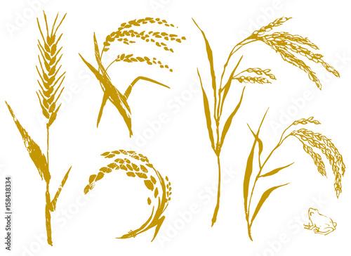 麦と米 セット Wallpaper Mural