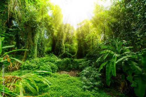 Tropical forest, trees in sunlight and rain
