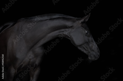 Autocollant pour porte Chevaux Black horse isolated on black background