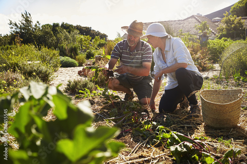 Mature Couple Working On Community Allotment Together Wallpaper Mural