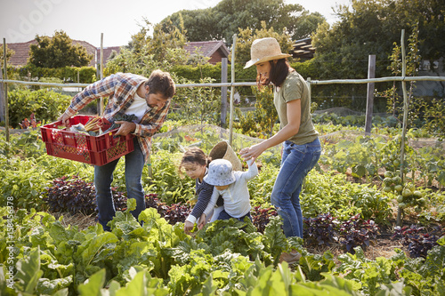 Photo Family Harvesting Produce From Allotment Together