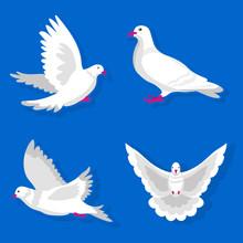 Pigeons Or White Dove Birds Fl...