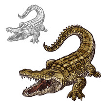 Crocodile Alligator Vector Iso...