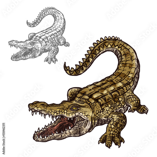 Fotomural Crocodile alligator vector isolated sketch icon