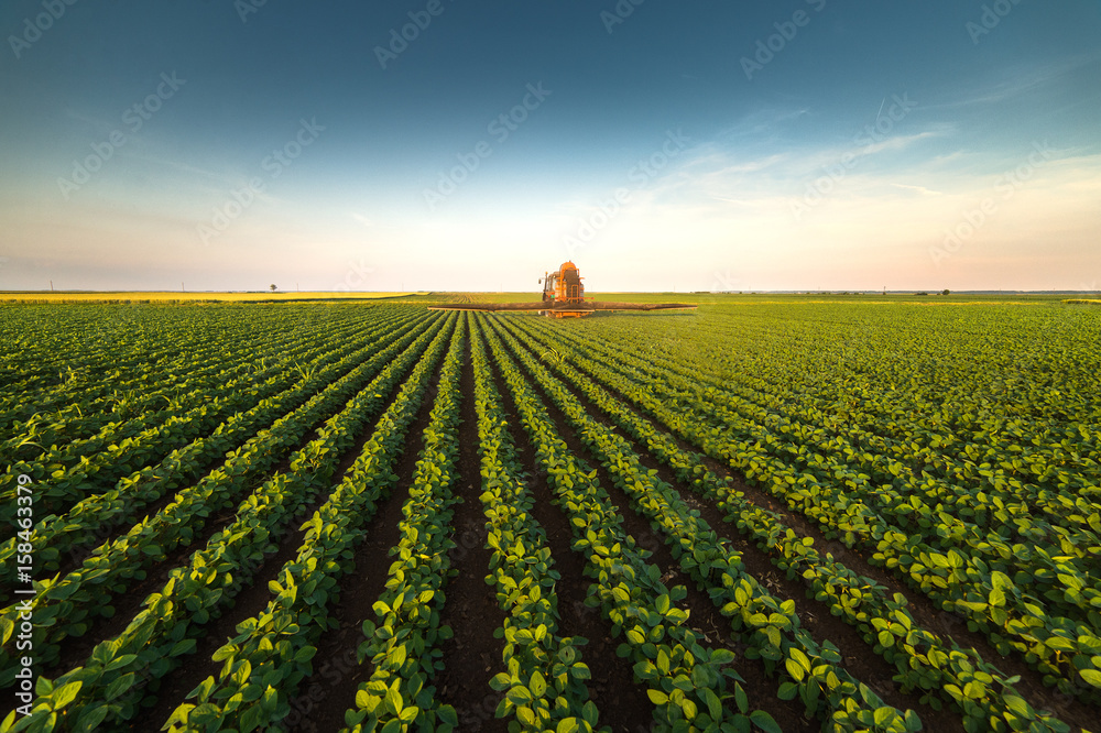 Fototapety, obrazy: Tractor spraying soybean field at spring