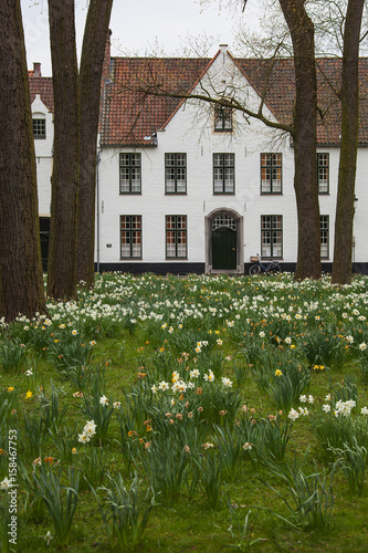 Deurstickers Brugge Picturesque white houses in the Beguinage (Begijnhof) with beautiful flowering daffodils in the foreground in medieval neighborhood of Bruges (Brugge), Belgium